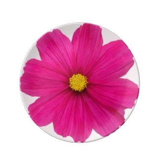 cute girly pink real flower photography plate