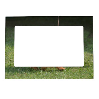 Cute Glen of Imaal Terrier Magnetic Picture Frame