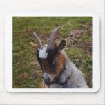 Cute Goat. Mousepads