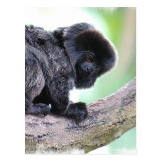 Cute Goeldi Postcard
