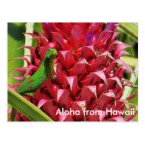 Cute gold dust day gecko pink pineapple Hawaii Postcard