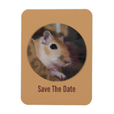 Cute Golden Pet Gerbil Magnet at Zazzle