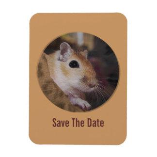 Cute Golden Pet Gerbil Rectangular Photo Magnet