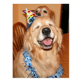 Cute Golden Retriever Birthday Wishes Postcard