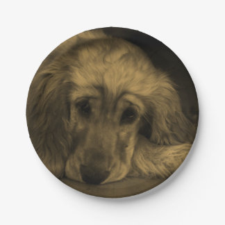 Cute Golden Retriever Dog Laying Down Paper Plate