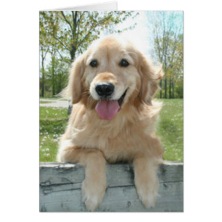 Cute Golden Retriever Dog on Fence Thinking of You Card