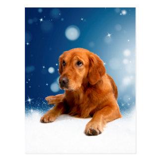 Cute Golden Retriever Dog Sitting in Snow Stars Postcard
