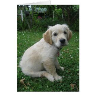 Cute Golden retriever puppy. Card
