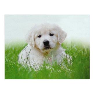 Cute Golden Retriever Puppy Dog Green Grass Postcard