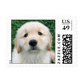 Cute Golden Retriever Puppy Postage Stamp