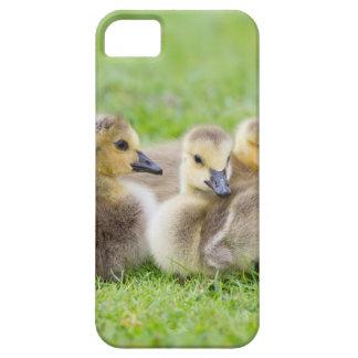 Cute Goslings iPhone 5 Case