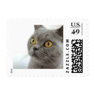 Cute Gray Cat Postage