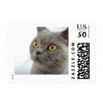 Cute Gray Cat Postage