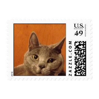 Cute Gray Kitten Stamp