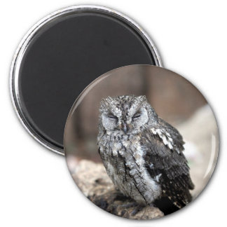 Cute Gray Owl 2 Inch Round Magnet
