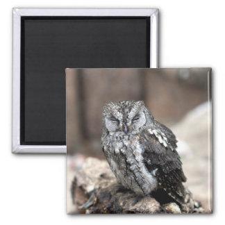 Cute Gray Owl Magnet