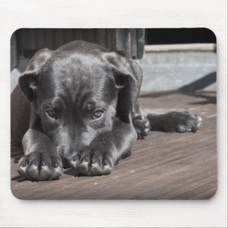 Cute, Gray, Shy Great Dane Puppy Mouse Pad