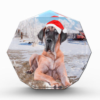 Cute Great Dane Dog Sitting In Snow Christmas Hat Acrylic Award