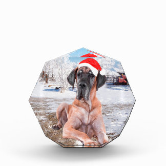 Cute Great Dane Dog Sitting In Snow Christmas Hat Award