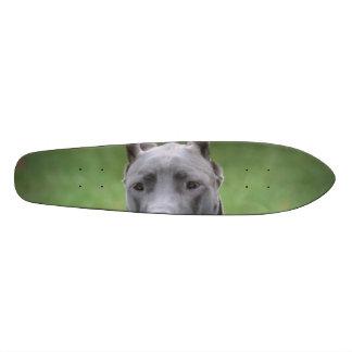 Cute Great Dane Skateboard Decks