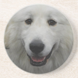 Cute Great White Pyrenees Beverage Coaster