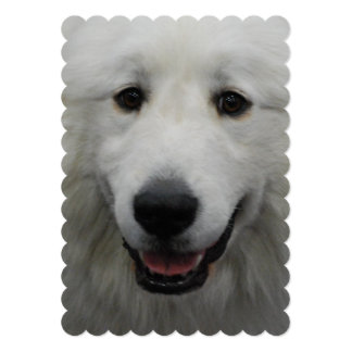 Cute Great White Pyrenees 5x7 Paper Invitation Card