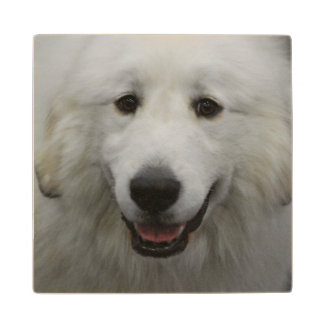 Cute Great White Pyrenees Maple Wood Coaster