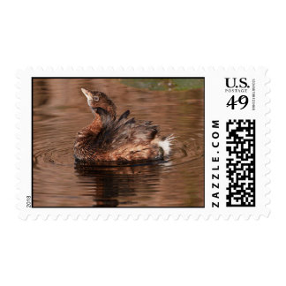 Cute Grebe Stamp
