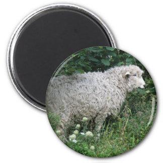 Cute Greedy Sheep Eating Magnet