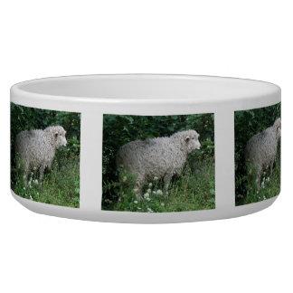 Cute Greedy Sheep Eating Pet Bowl