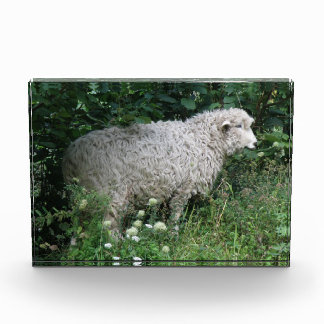 Cute Greedy Sheep Eating Photo Block Award