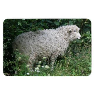 Cute Greedy Sheep Eating Premium Magnet