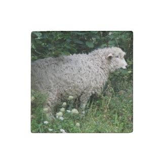 Cute Greedy Sheep Eating Stone Magnet