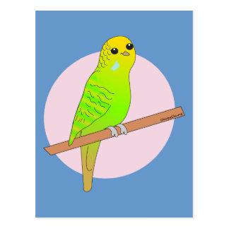 Cute Green Budgie Postcard