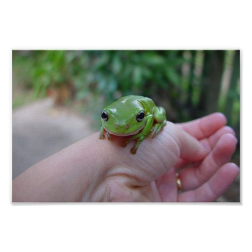 Cute Green Candid Frog On The Hand Poster