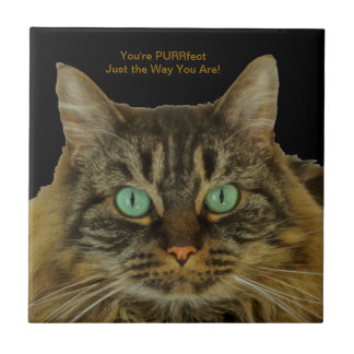 Cute Green Eyed Cat Makes a PURRfect Gift! Tile