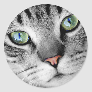 Cute green eyed cat portrait classic round sticker