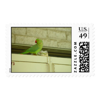 Cute Green Parrot On The Cupboard Postage Stamp