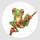 Cute Green Tree Frog on a Branch on White Classic Round Sticker