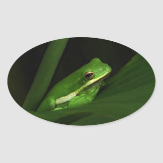 Cute Green Tree Frog Stickers