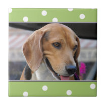 Cute green white polka dots Photo template tile