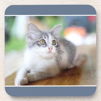 Cute Grey and White Kitten Photo Coaster