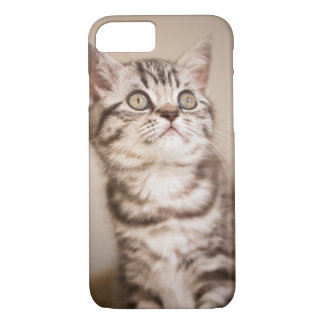 Cute Grey British Short Hair Kitten (Blue Tabby) iPhone 7 Case