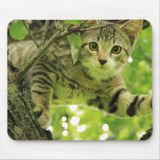 Cute grey cat in a tree mouse pad