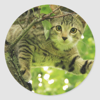 Cute grey cat in a tree round stickers