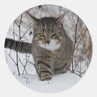 Cute grey cat in snow sticker