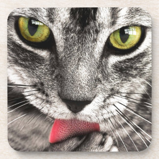 Cute grey cat licking paw beverage coaster
