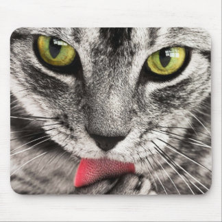 Cute grey cat licking paw mouse pad