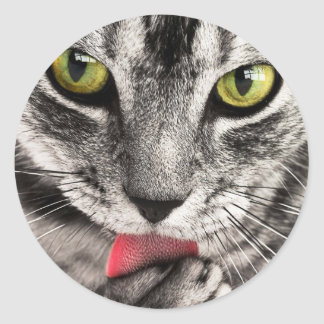 Cute grey cat licking paw round stickers