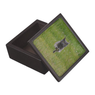 Cute Grey Farm Cat Racing Across Green Grass Photo Jewelry Box